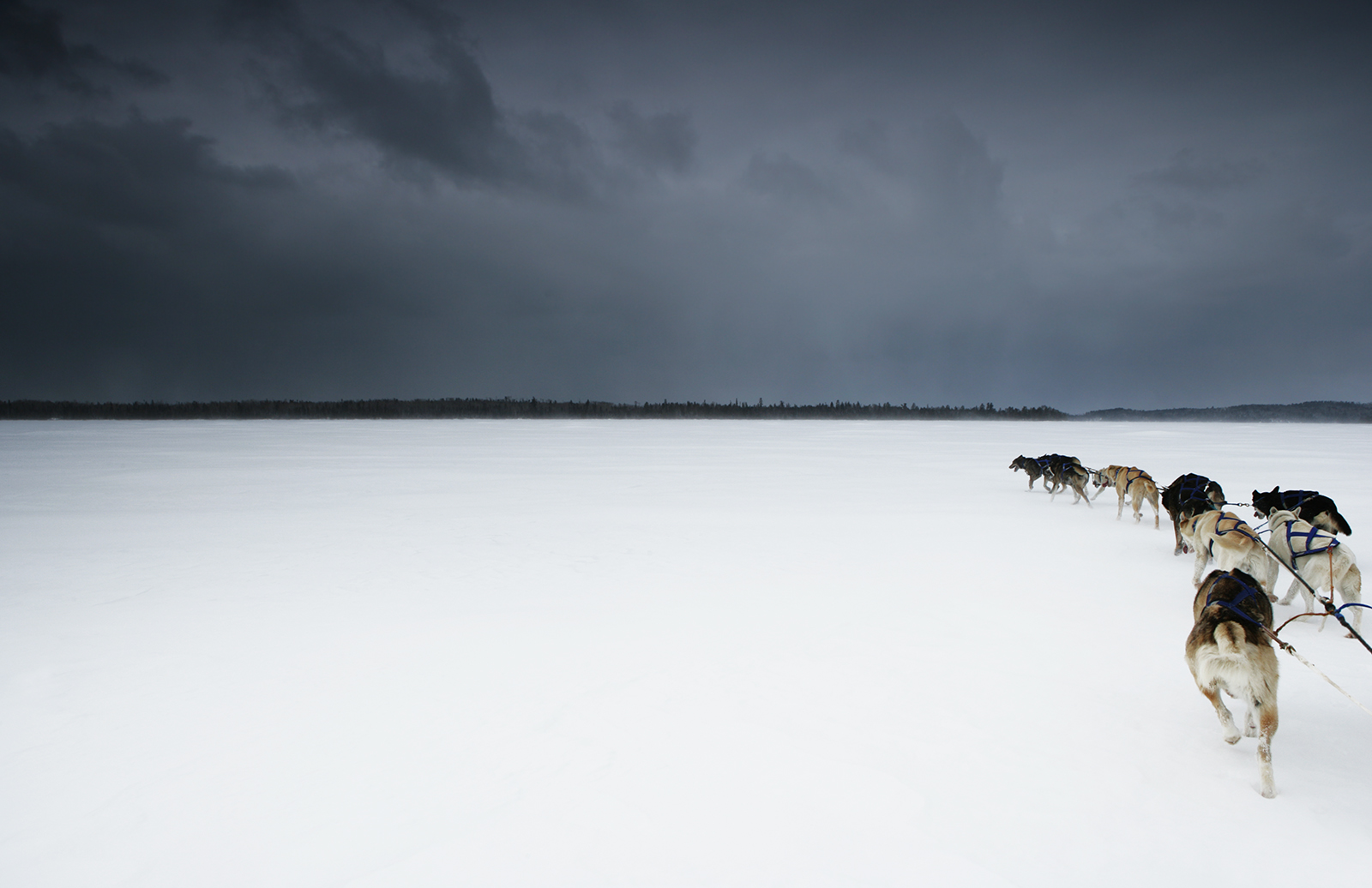 dogs35b.jpg