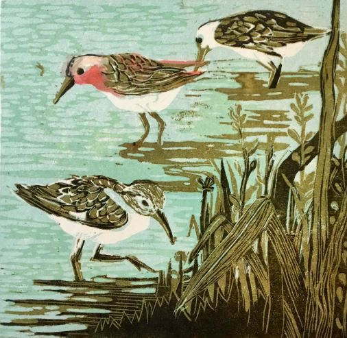 Red Necked Stirt_Lino Print_ Robyn Culley_small.jpg