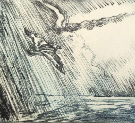 Soaring above the Storm, Ruddy Turnstone_drypoint_Stephen McDonald_small.JPG