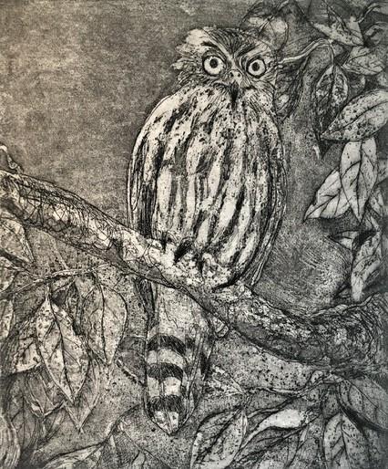 Barking Owl_Etching_Robyn Culley.JPG