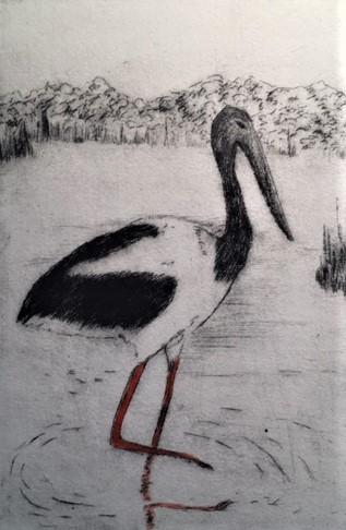 Steady (Black-neck Stork)_ Drypoint_Michelle Hallinan.JPG