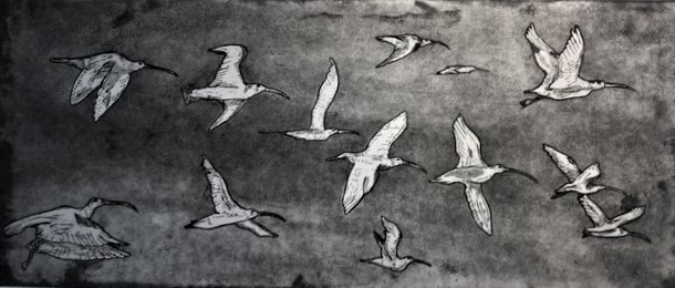 The last eastern curlews_etching aquatint_Christopher Clifton.JPG