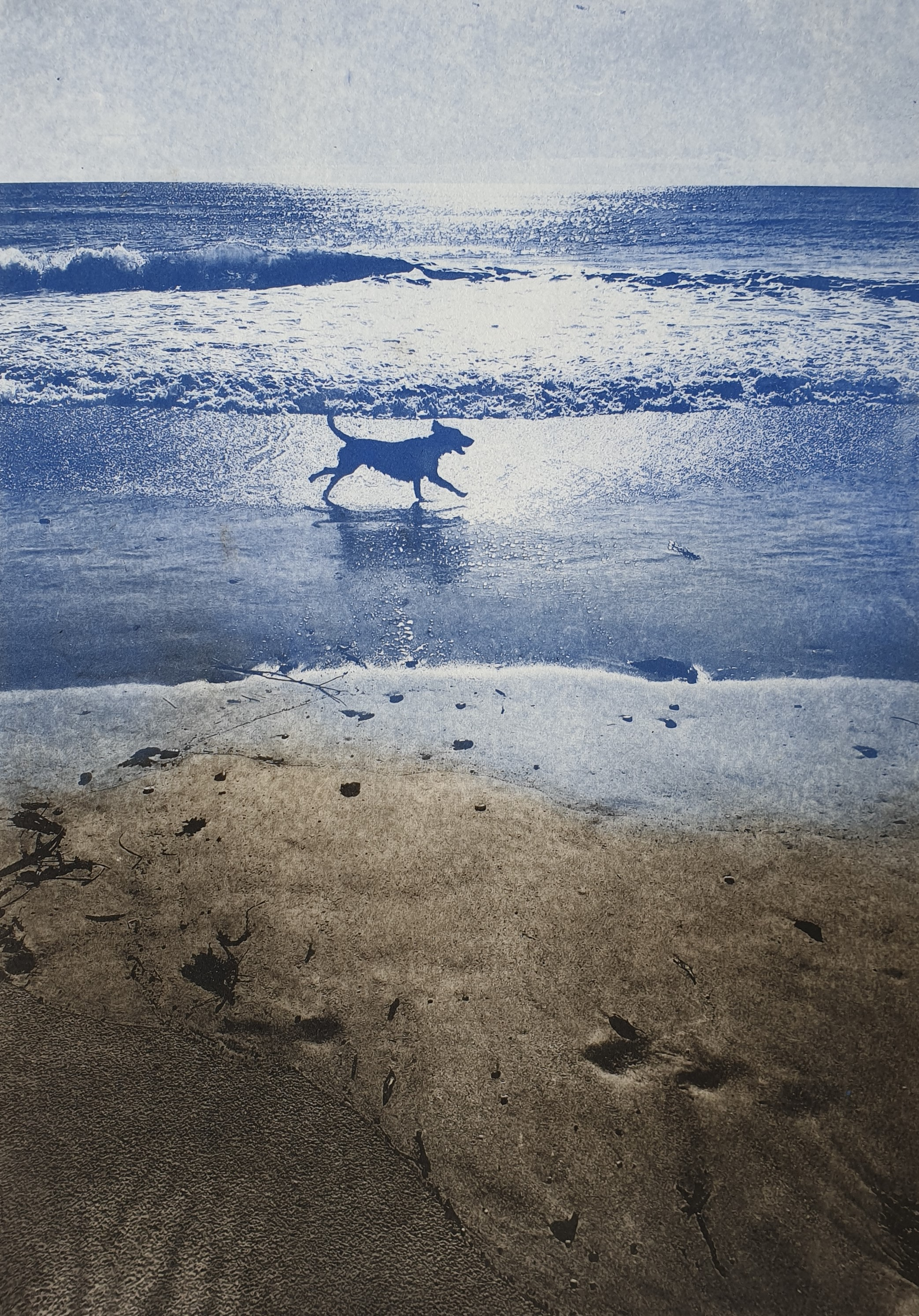 Morning Run_Solarplate_Amanda Watts.jpg