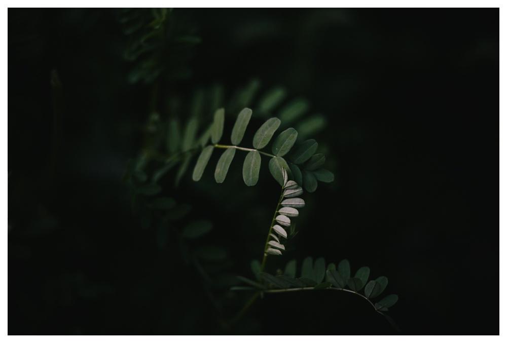 70-DanijelaWeddings-engagement-thebluffs-leaf.JPG