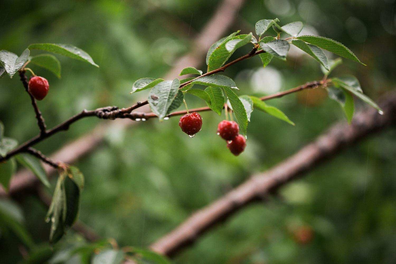 Kurtz-orchard-wedding-photos-danijelaweddings-rainy-romantic028.JPG