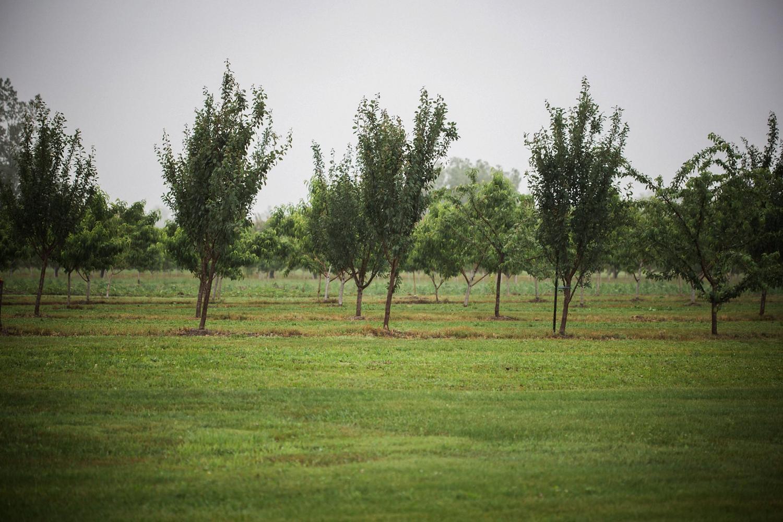 Kurtz-orchard-wedding-photos-danijelaweddings-rainy-romantic027.JPG