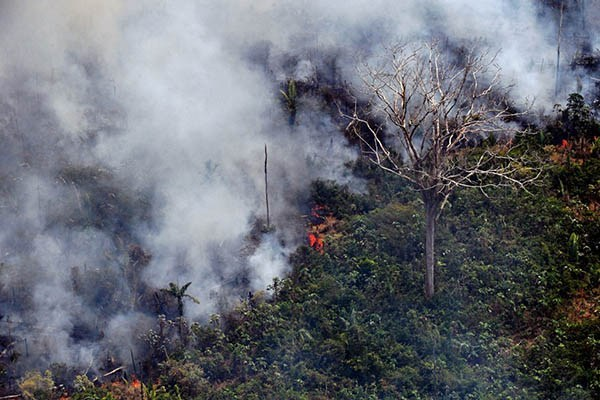 amazon-rainforest-burning.jpg