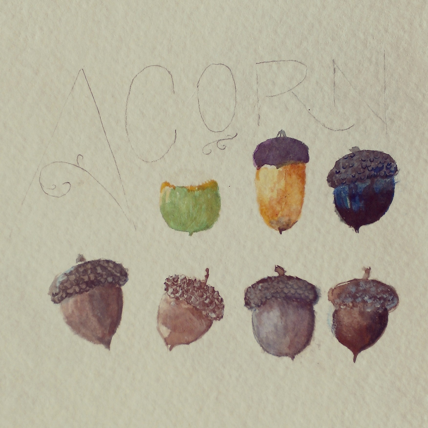 Work in Progress: Acorns