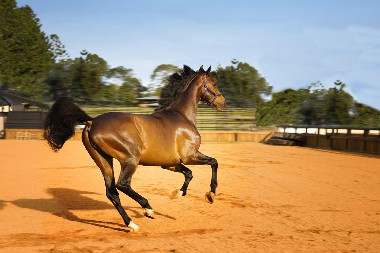 Maleny Horse stud.jpg