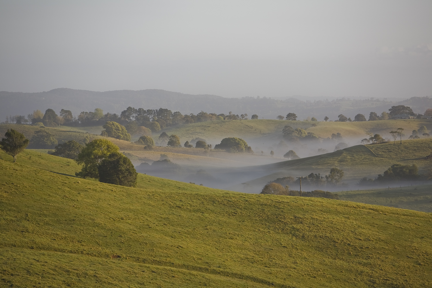 Misty morning in the Maleny countryside