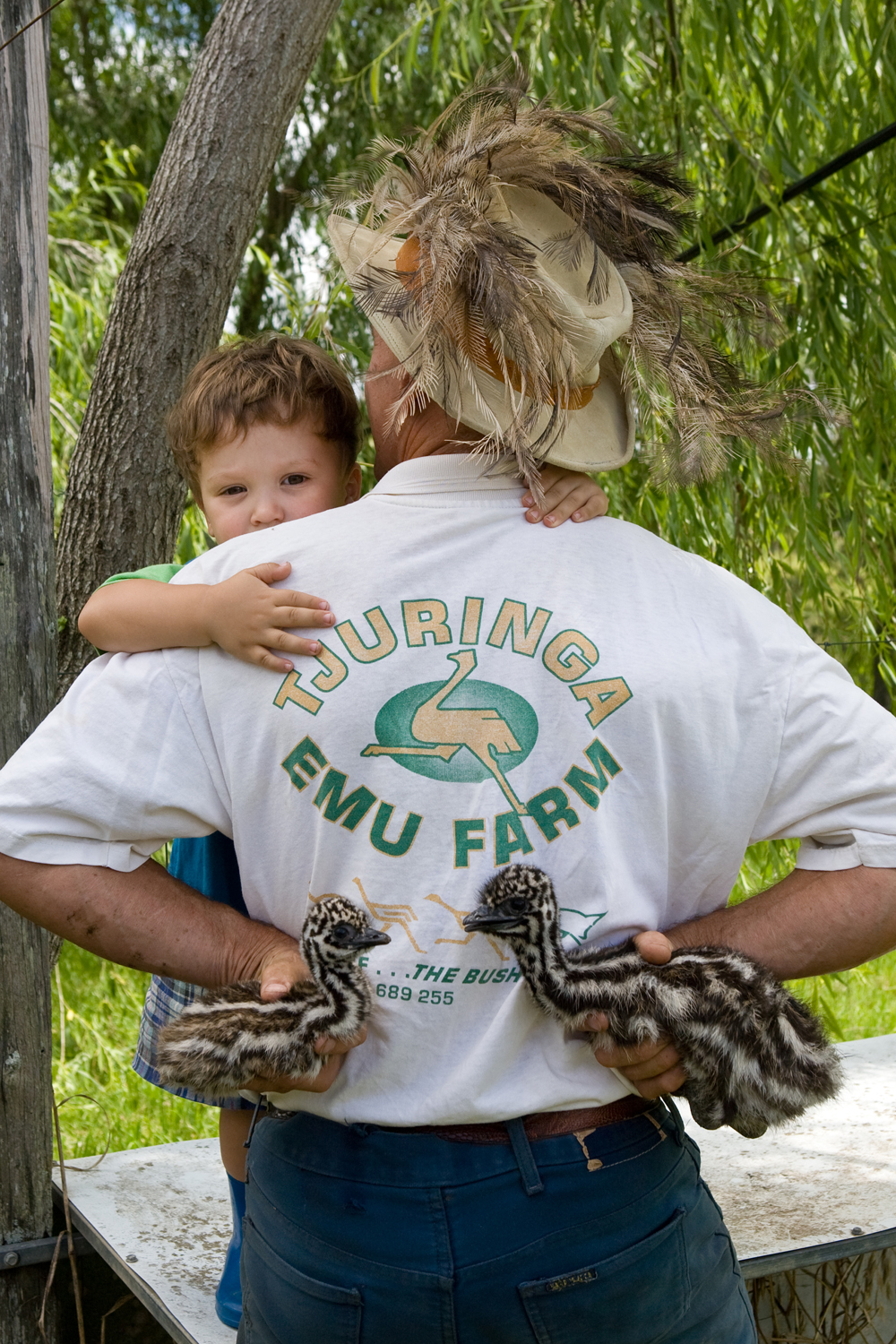 Father and son and emu chicks.jpg