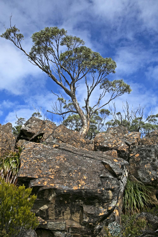 Mount Field rocks.jpg