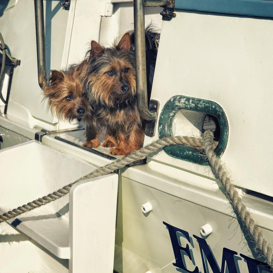 Penny Riddoch Photography Wooden Boat Festival 2 Baost dogs.jpg