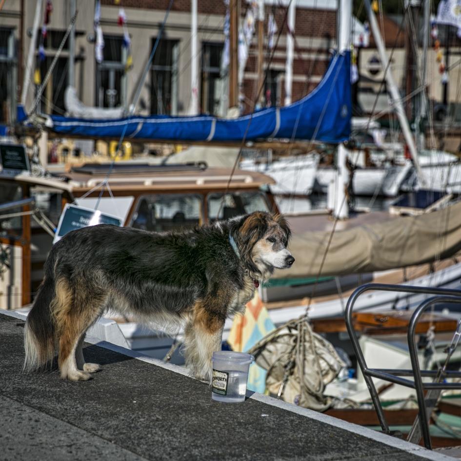 Penny Riddoch Photography Wooden Boat Festival 15 Old boat dog.jpg
