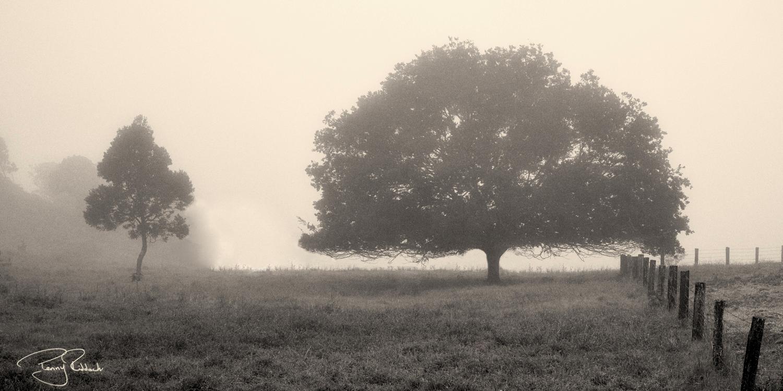 Maleny mist 2 Penny Riddoch-1.jpg