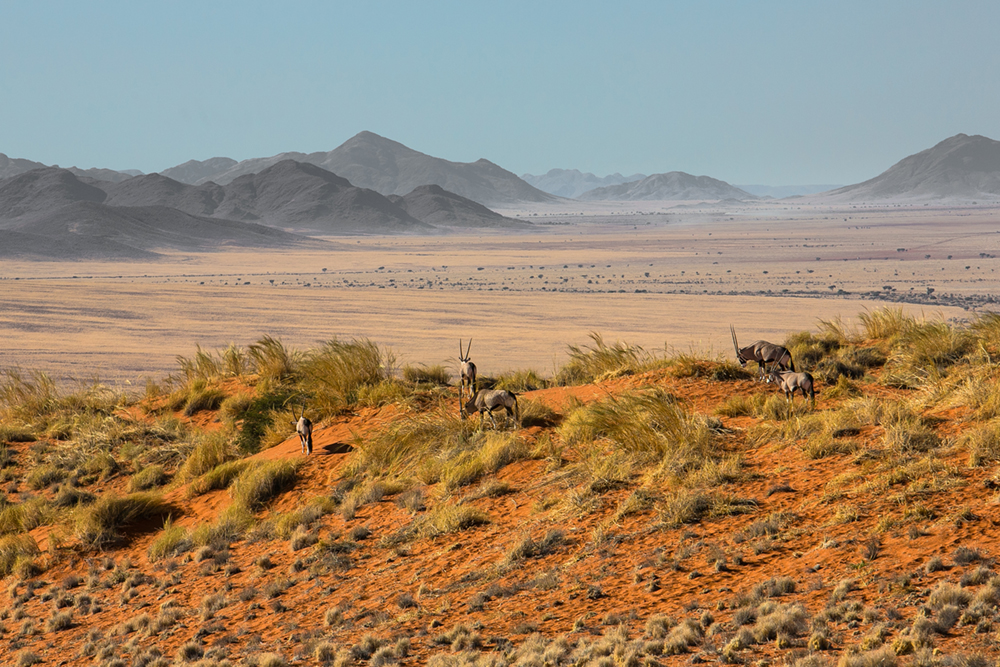 D Oryx Namibia Penny Riddoch.jpg