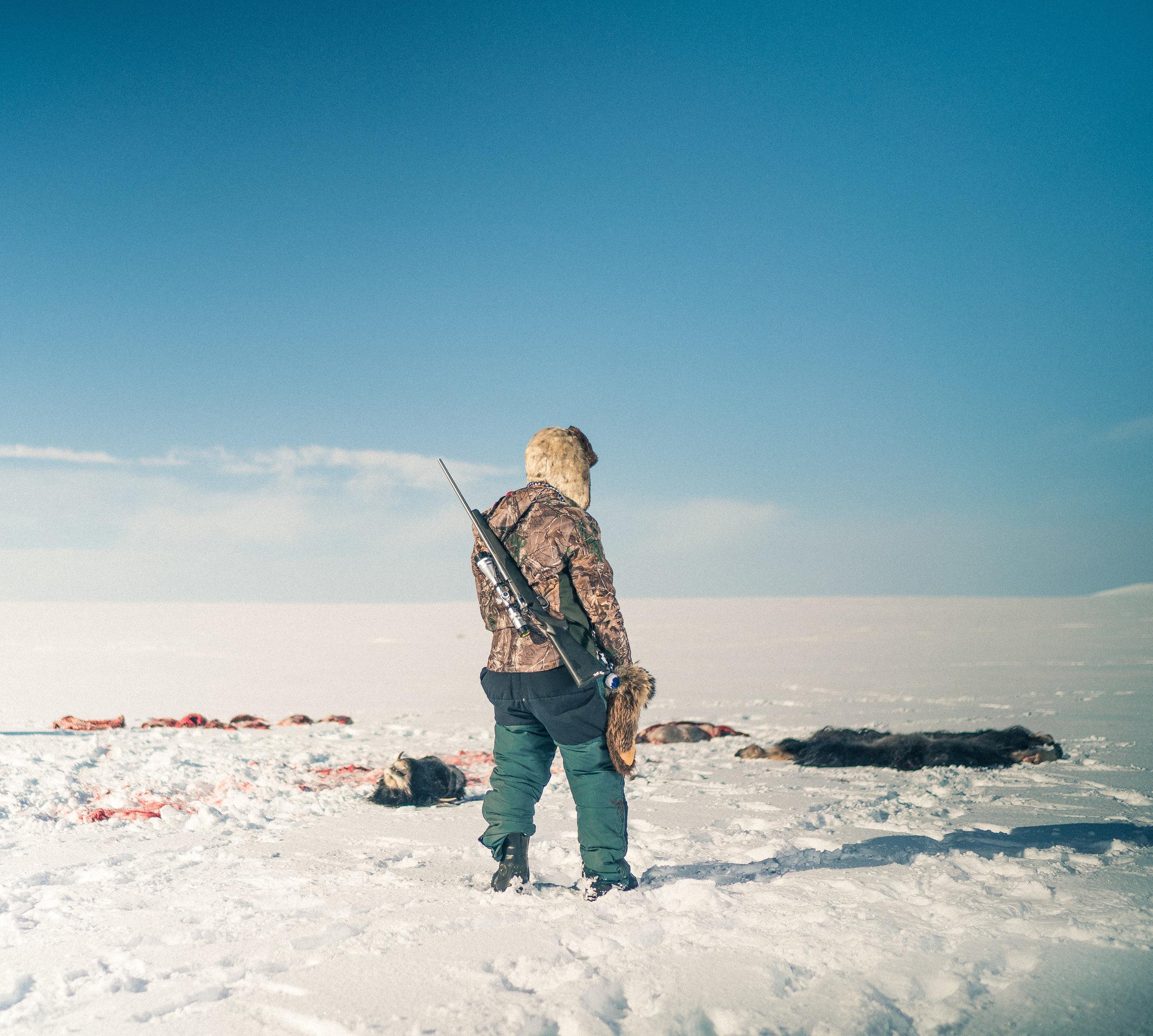 Clayton's first Musk Ox hunt [Nunivak Island, Alaska]