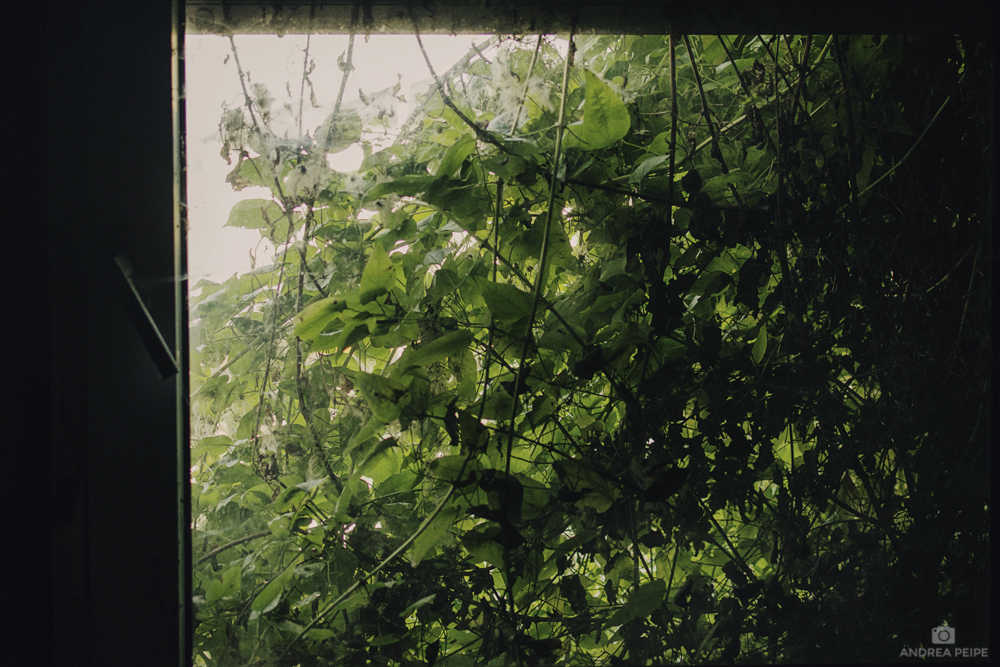 Overgrown window - Digital