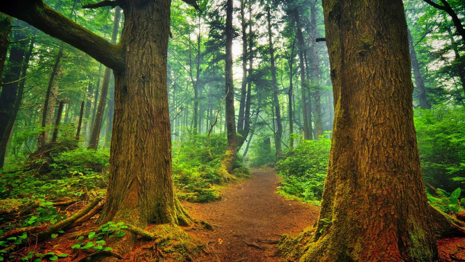 hd wallpapers 1080p forest__002.jpg