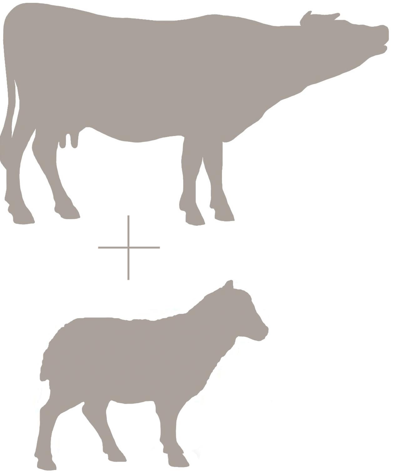 Cow and Sheep Emblem.jpg