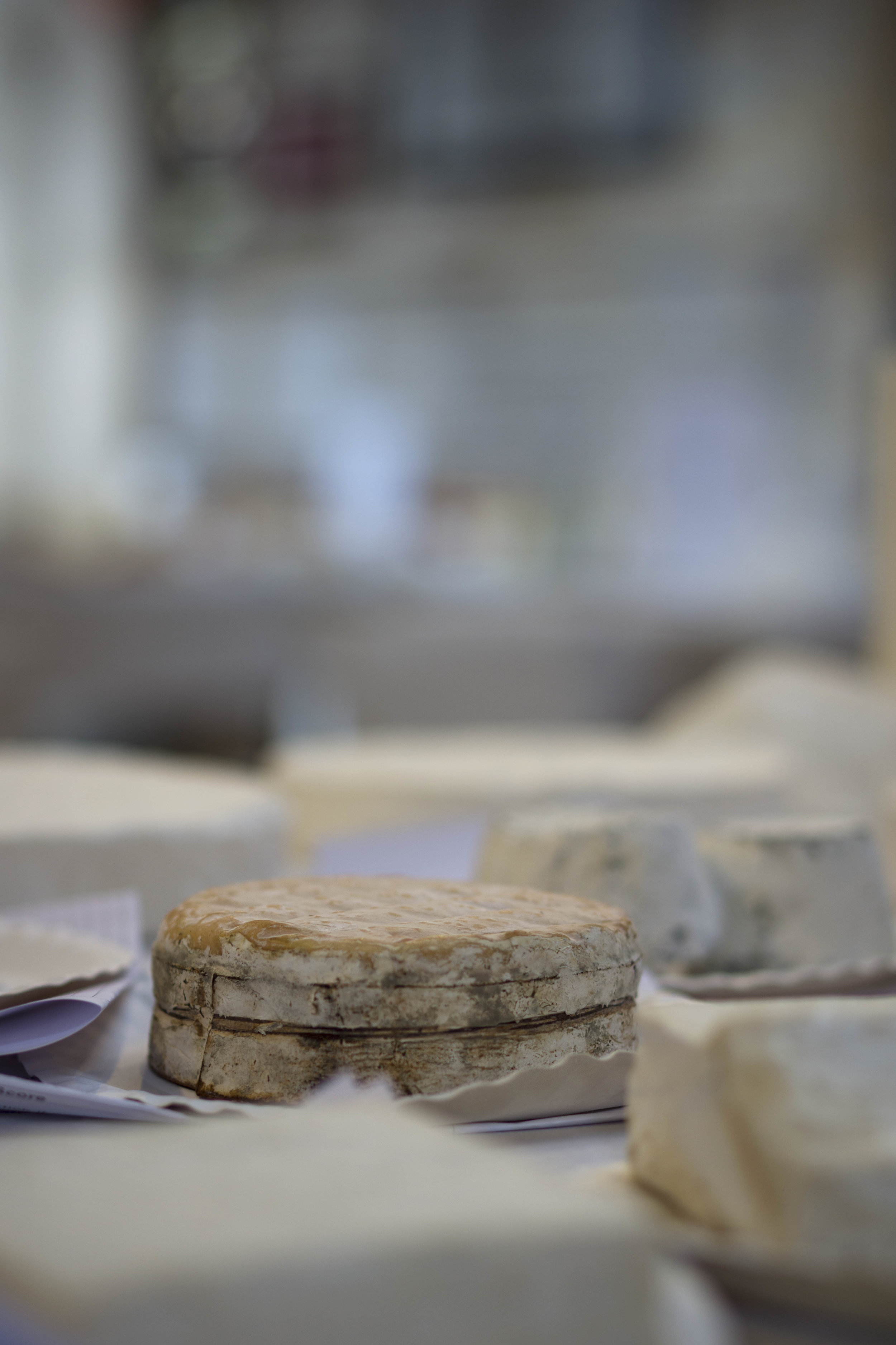 A selection of cheese awaiting the judging
