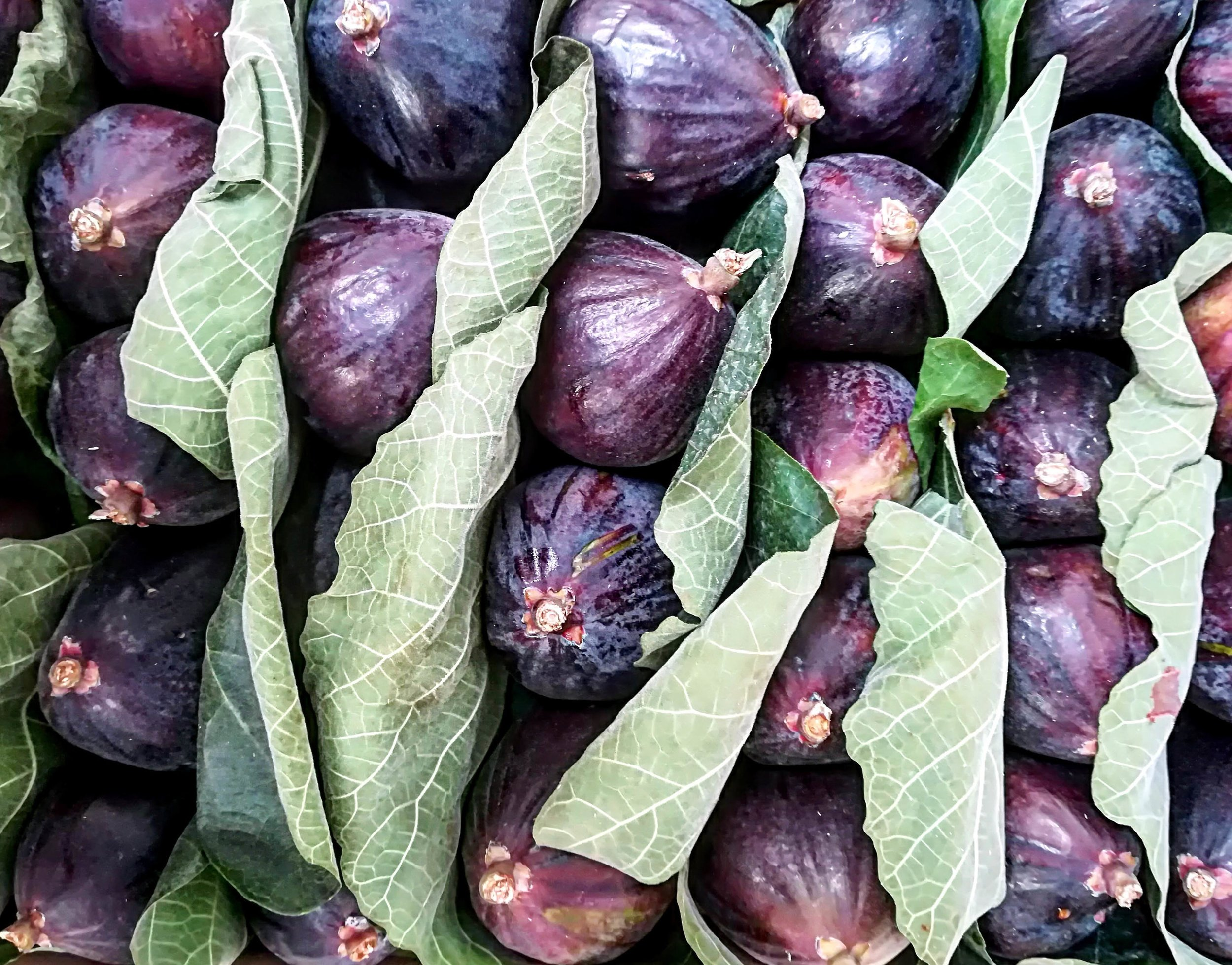 fioroni figs web.jpg