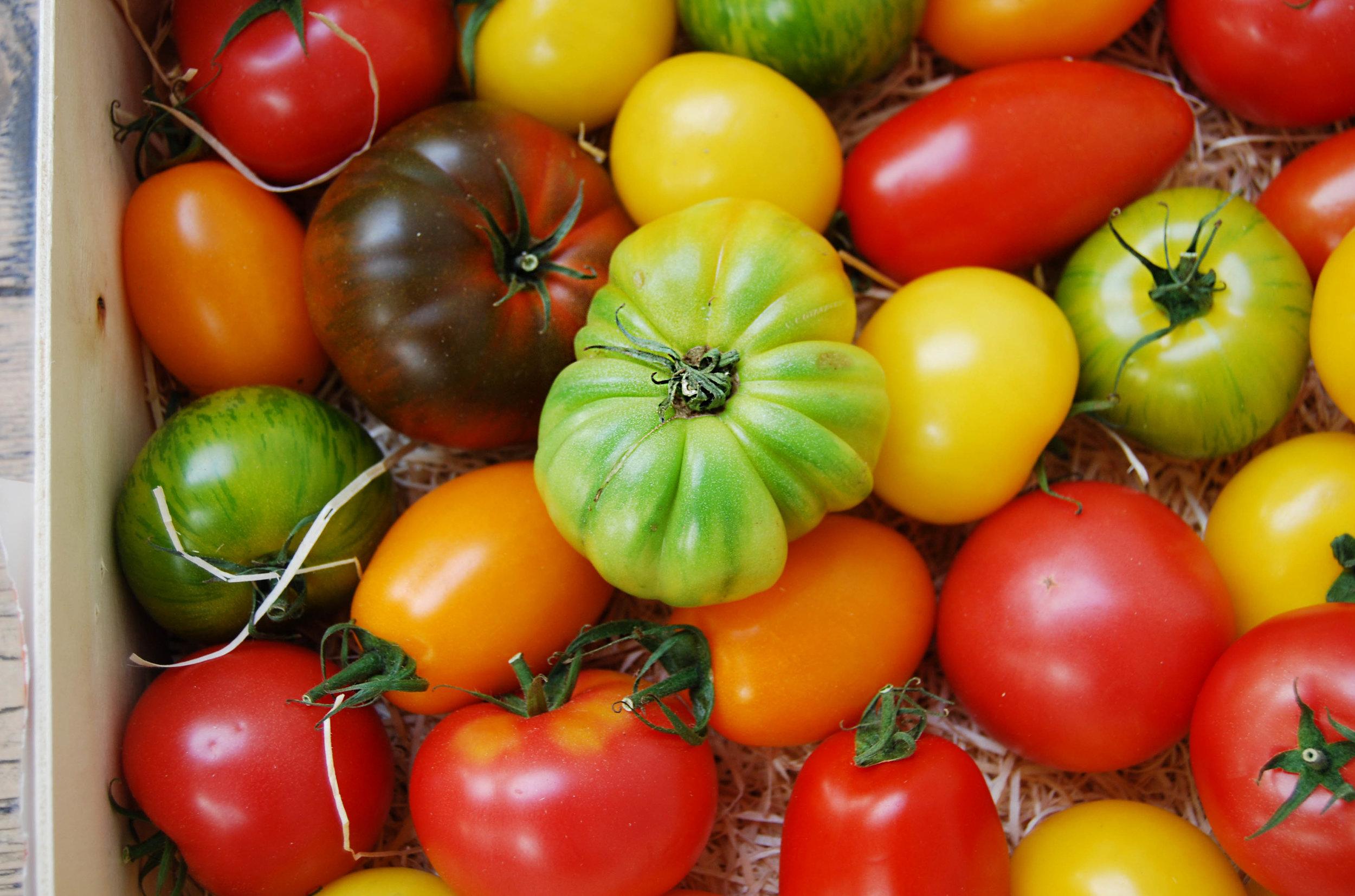 tomatoes - heirloom 2018 web.jpg