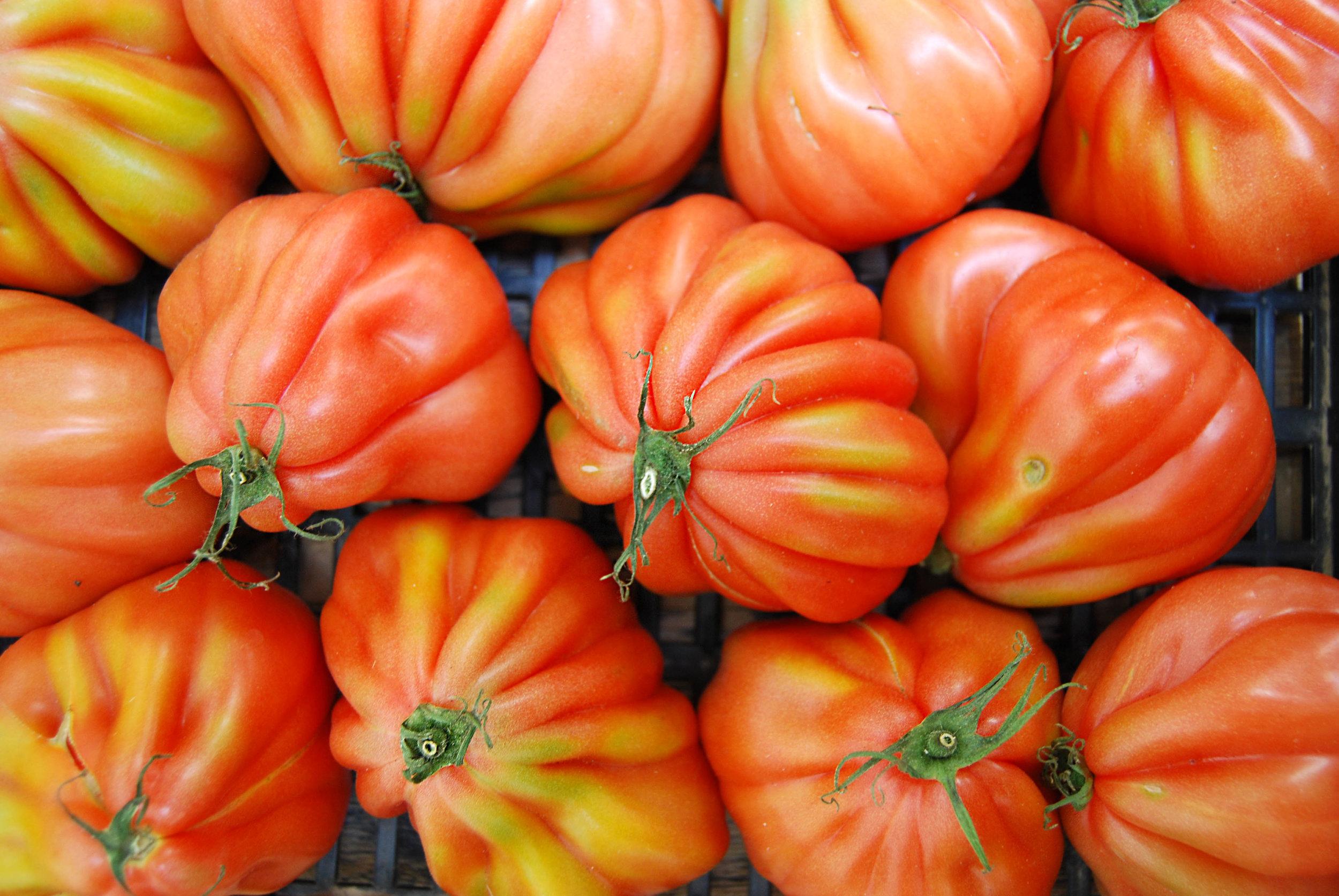 tomatoes - cuore di bue 2 web.jpg