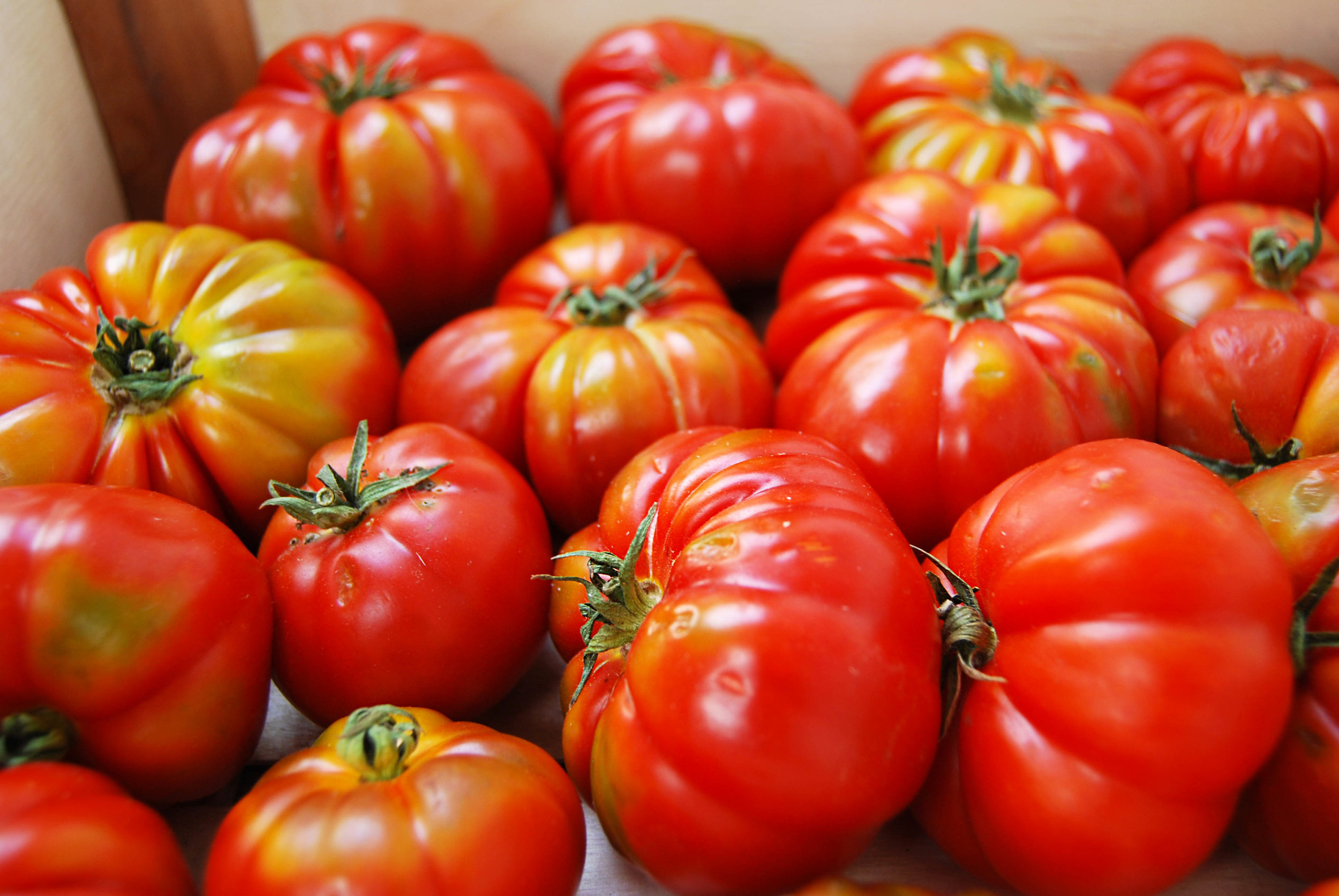 tomatoes - costuluto web.jpg