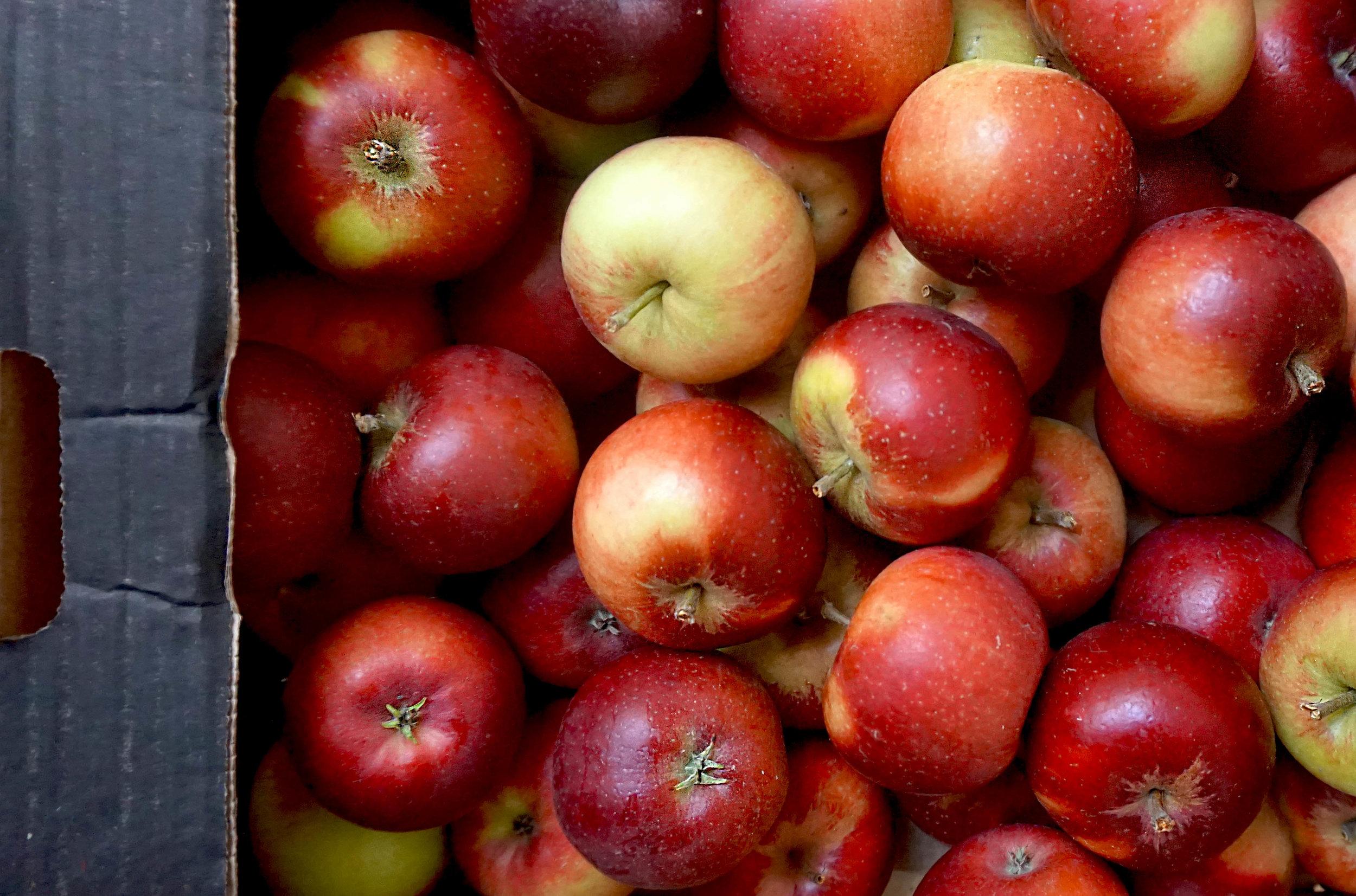 apples brogdale red devil web.jpg