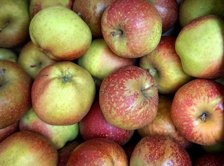 apples brogdale cornish aromatic web.jpg
