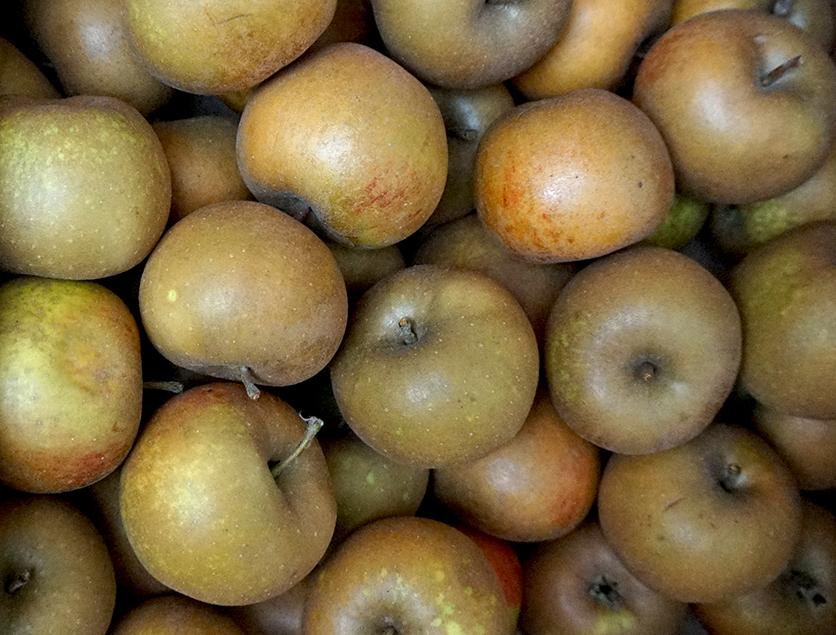 apples brogdale zabergau renette web.jpg