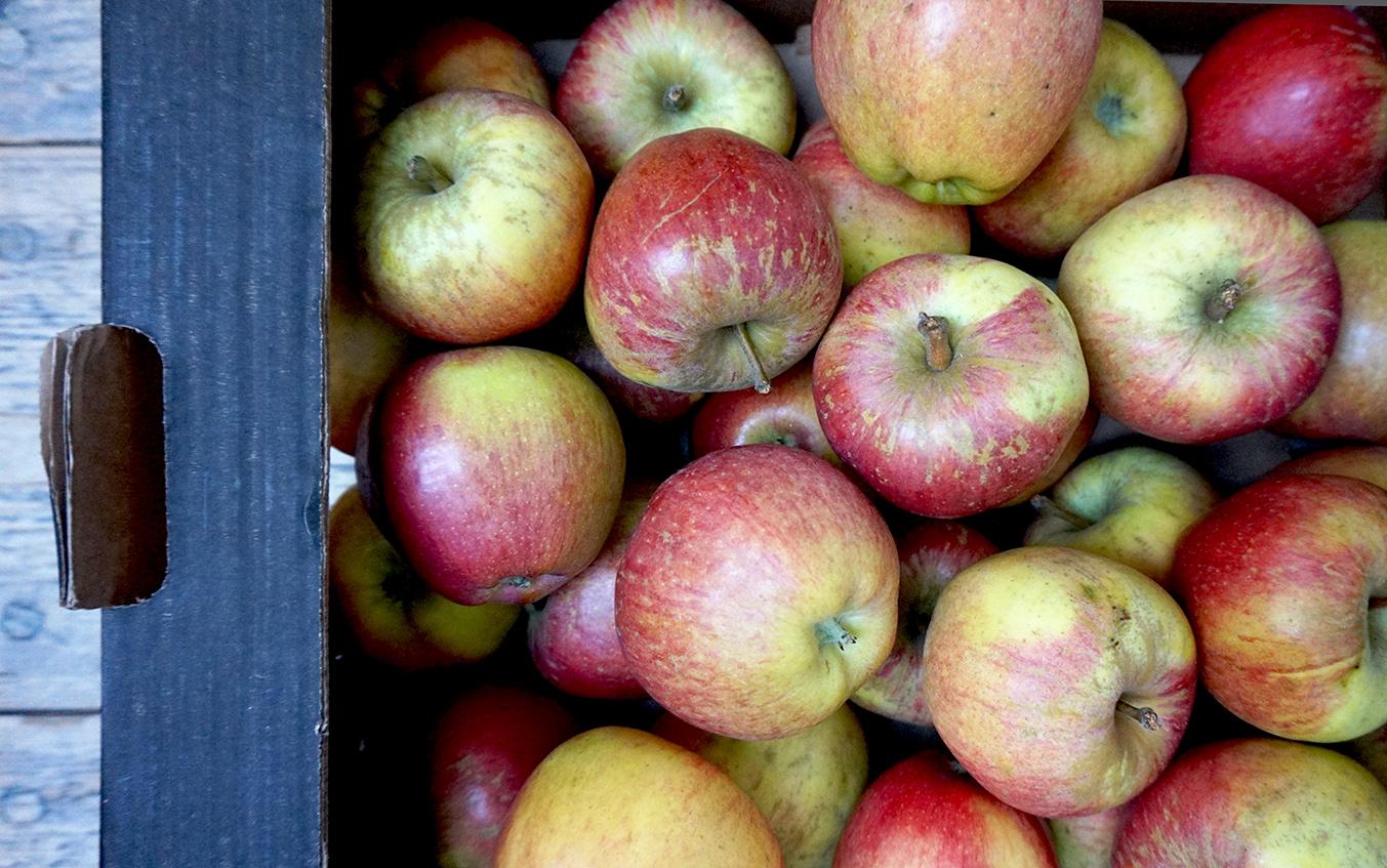 apples brogdale kidds orange red web.jpg
