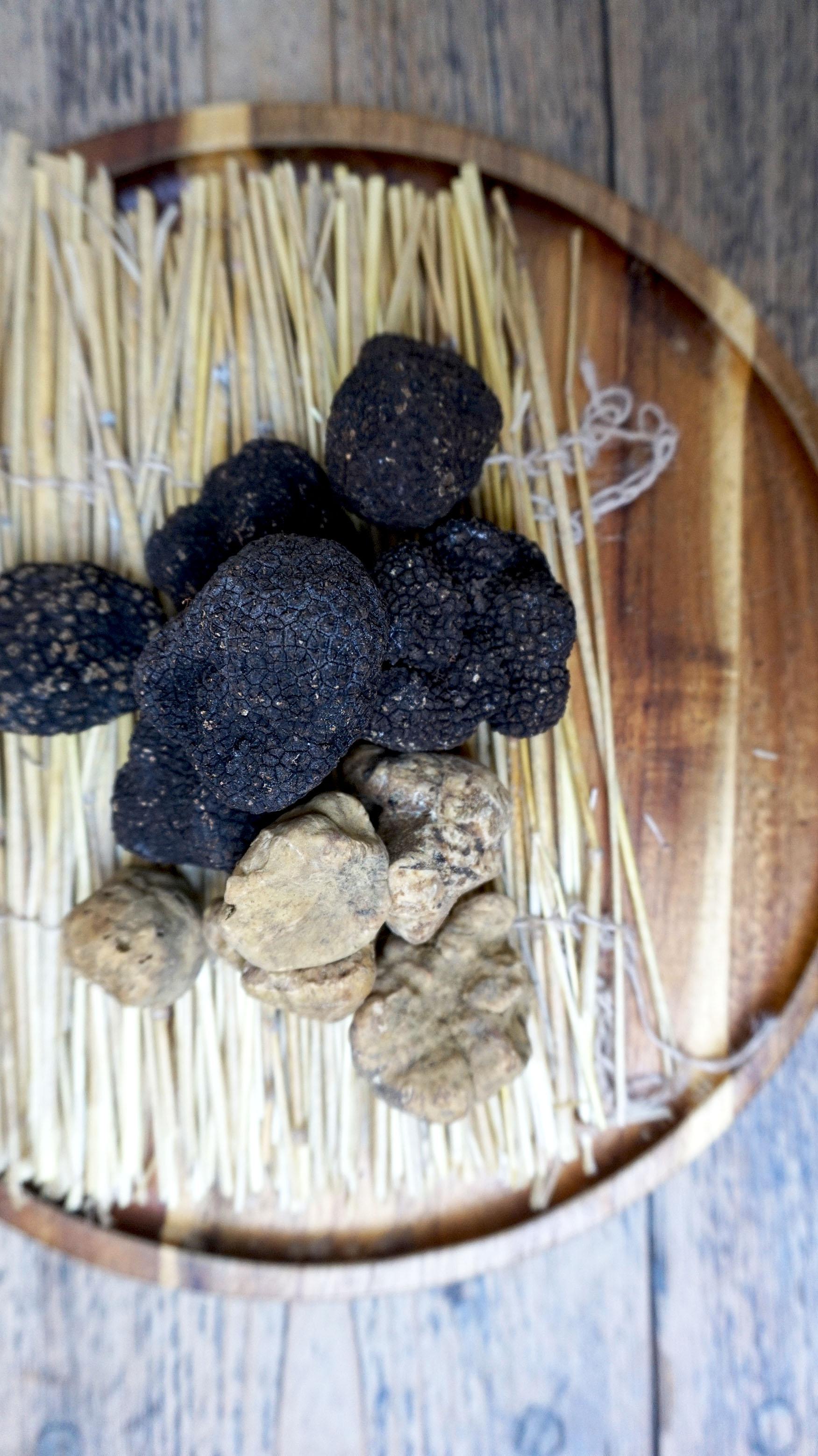 truffle web.jpg