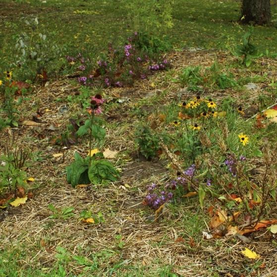 15 garden.jpg
