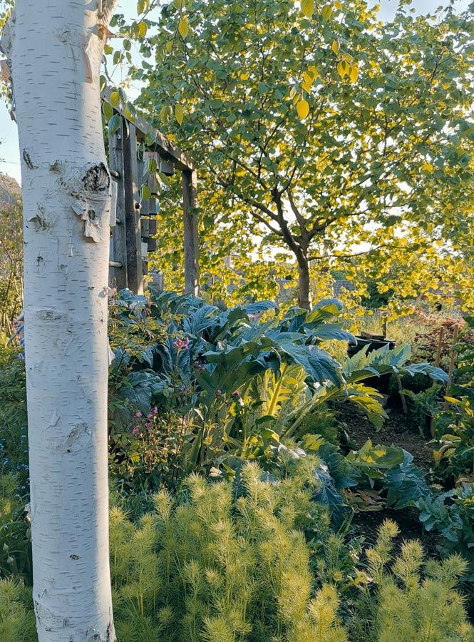 rogue designs garden18.jpg