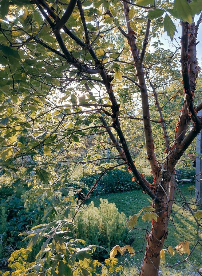 rogue designs garden17.jpg