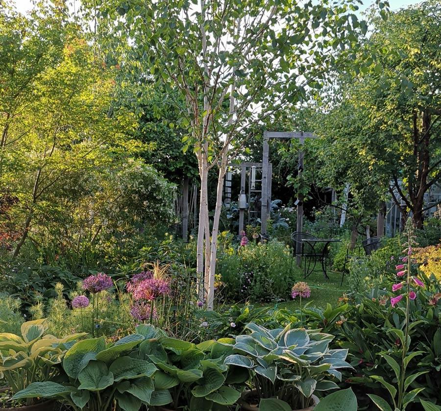 rogue garden4.jpg