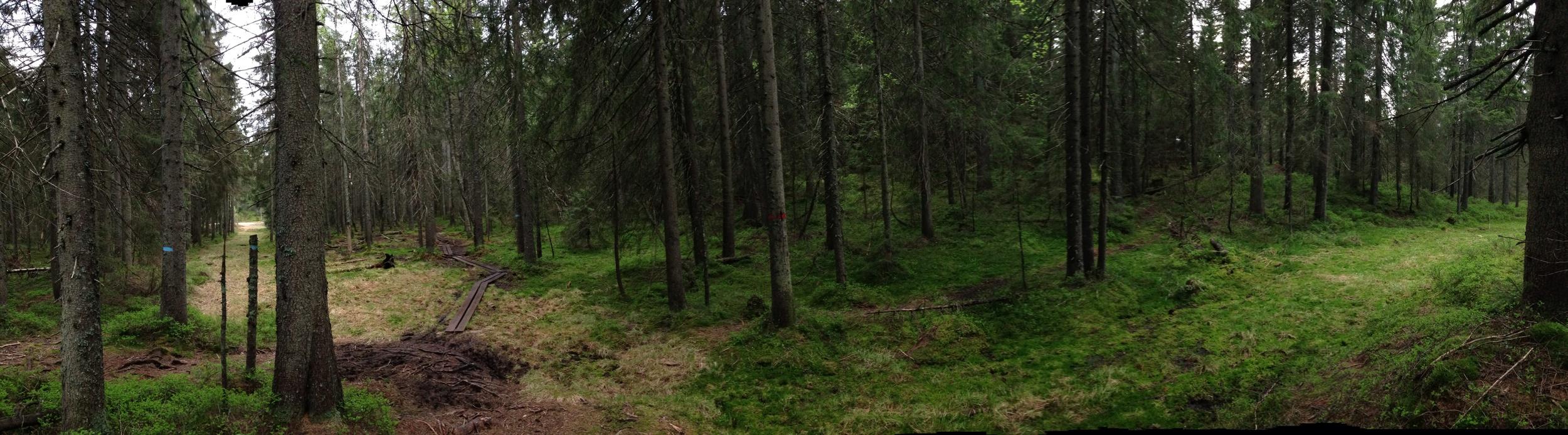 Ut i skogen, opp i trærne!