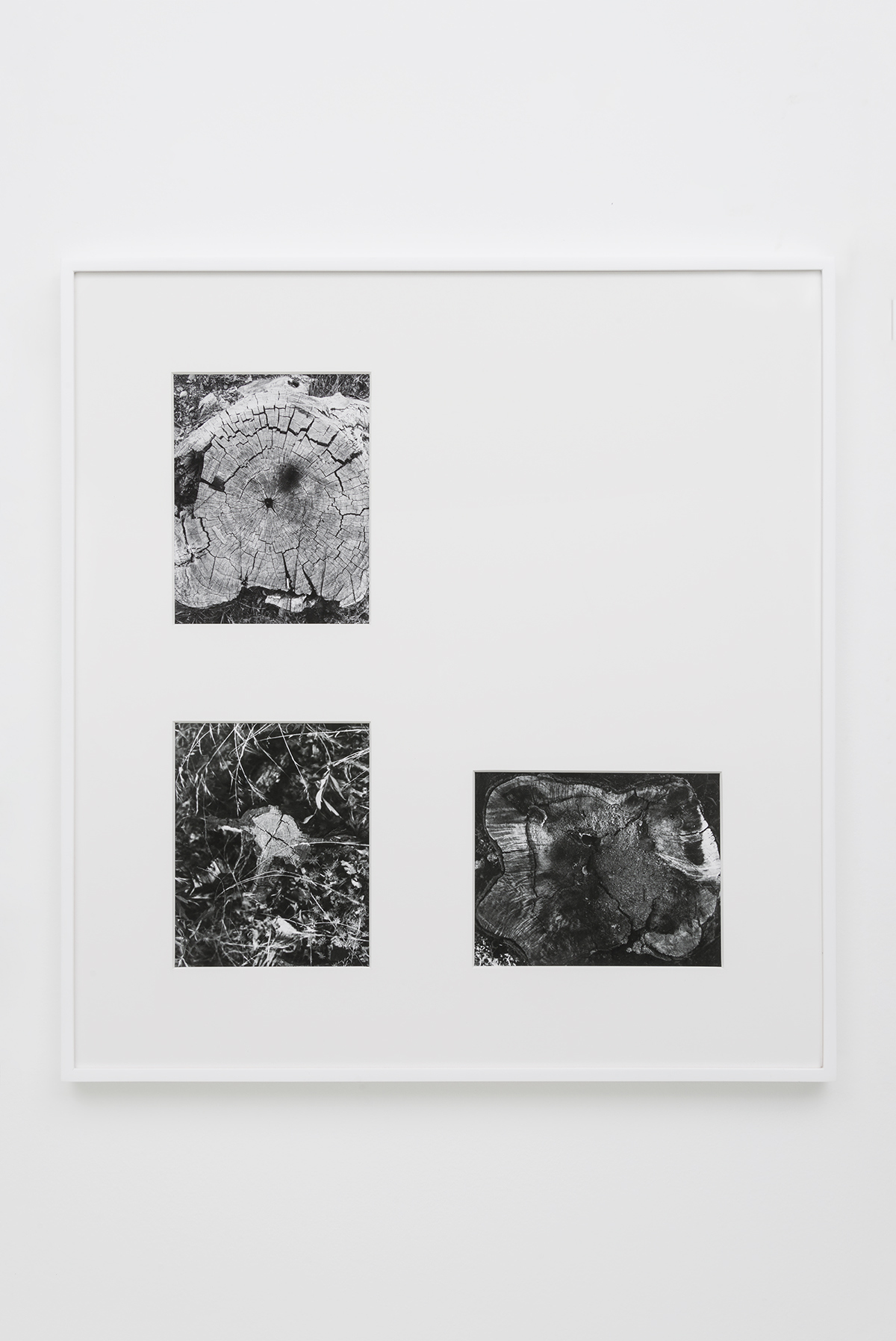 "Devon Oder - Stump Suite - 2016 - 3 Archival Inkjet Prints - 8 x 10"" Photos, 30 x 32"" Matted and Framed"