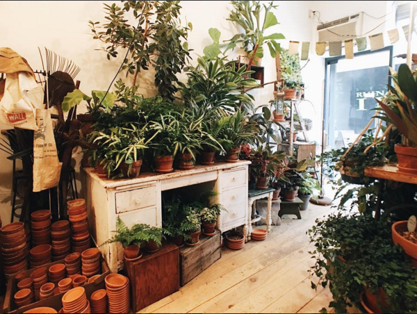 Interior of Green Fingers, from  @hey__judes