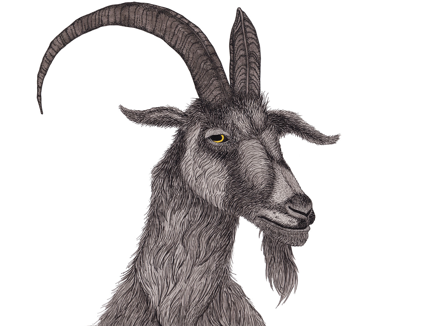 goat-black-phillip-illustration-matthew-woods.jpg