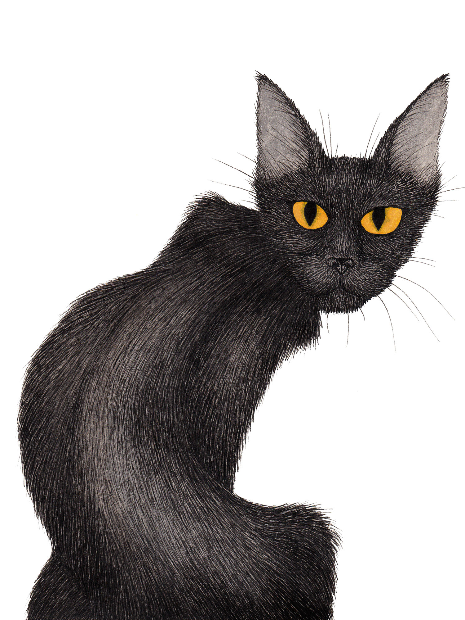 black-cat-yellow-eyes-illustration-matthew-woods.jpg