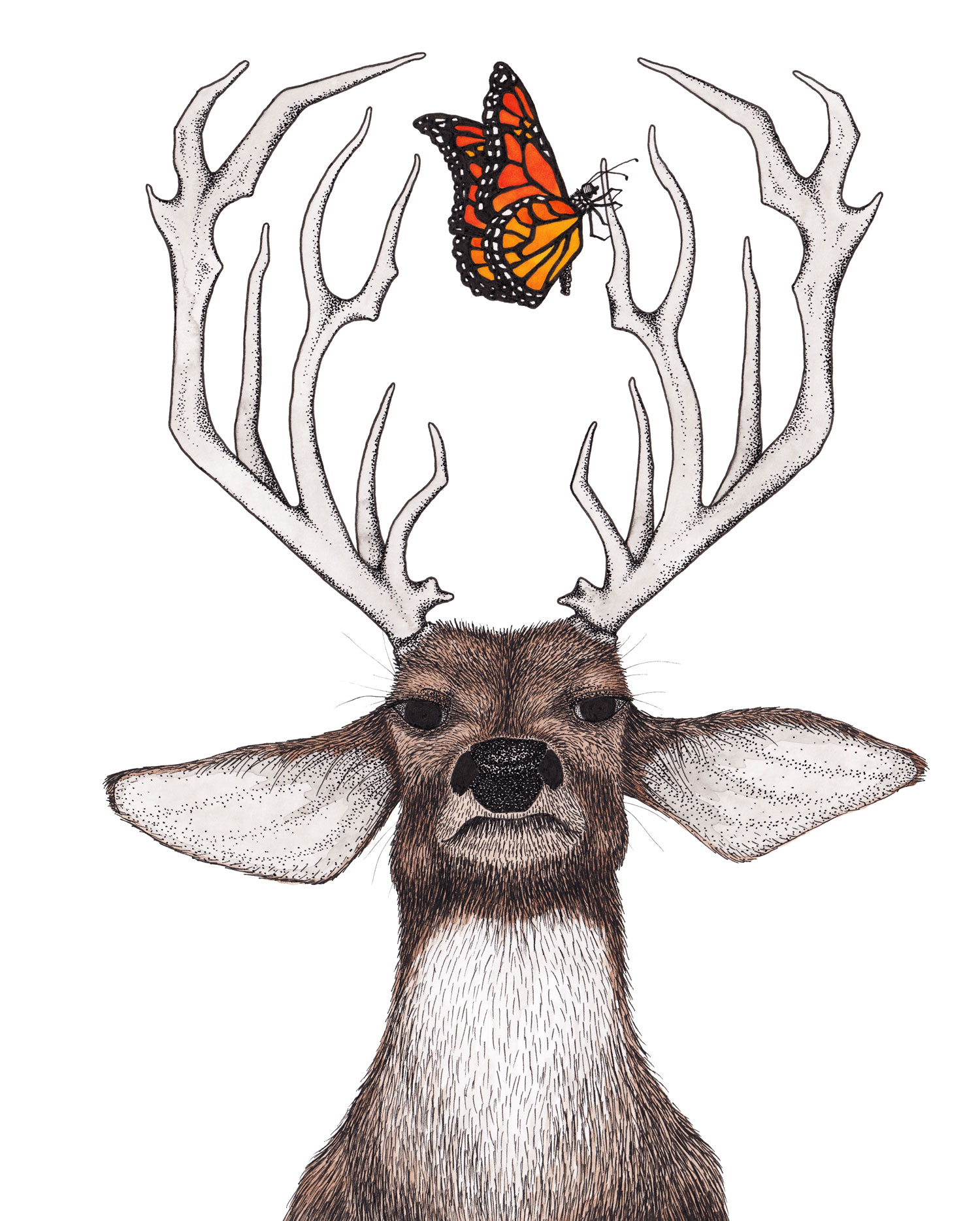 deer-stag-monarch-butterfly-antlers-illustration-matthew-woods.jpg