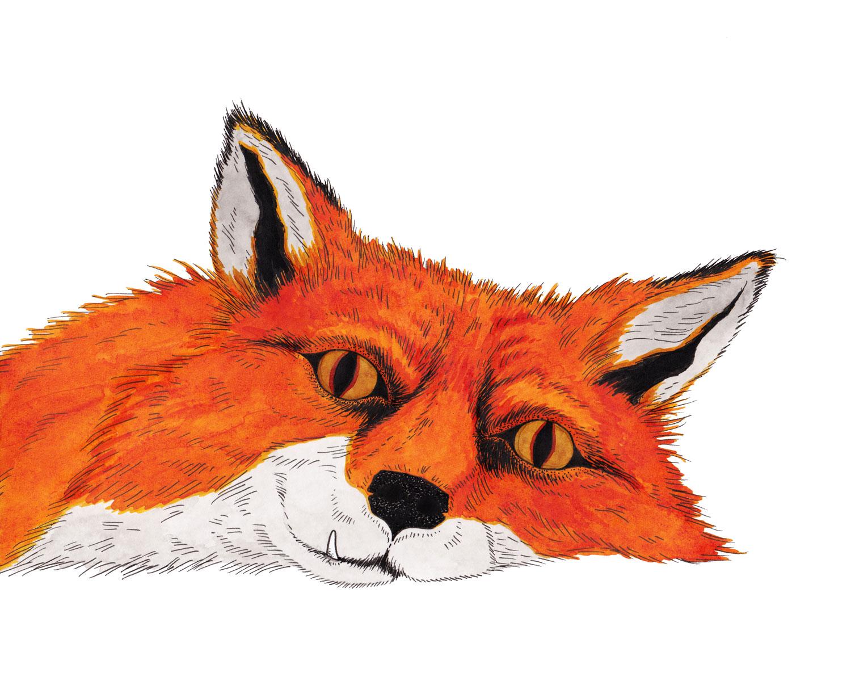 fox-nap-juniper-fang-illustration-matthew-woods.jpg