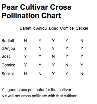 Pear Cultivar Cross Pollination Chart