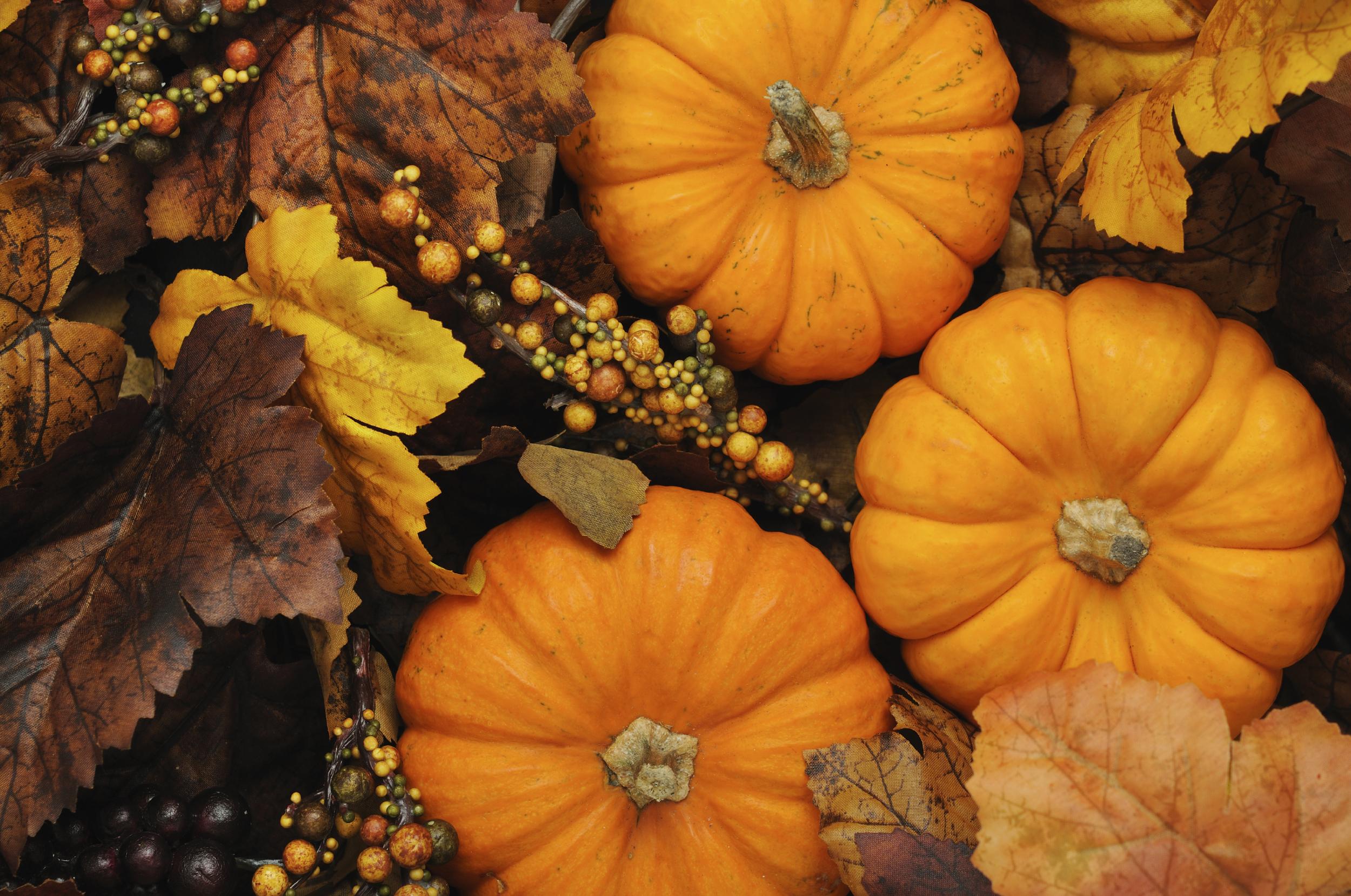 Pumpkin 17342555_Large.jpg