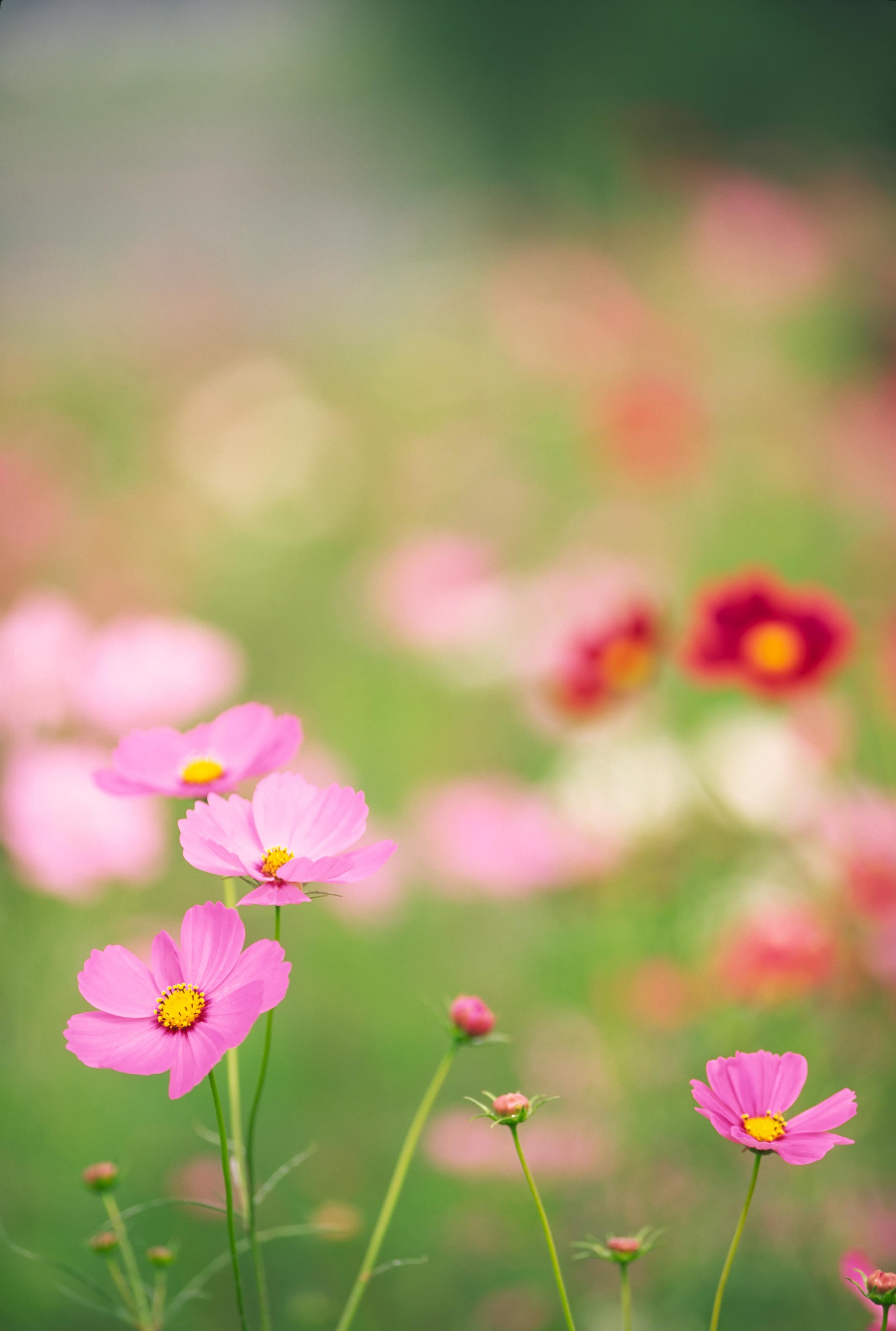 Flowers 9049614_Full.jpg