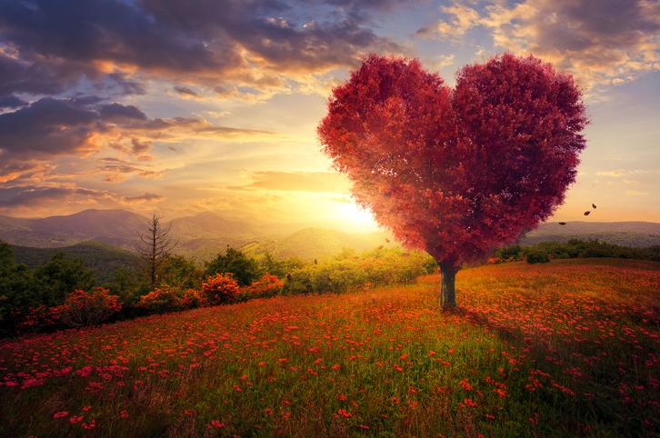 Red-heart-shaped-tree-542701780_728x483.jpeg