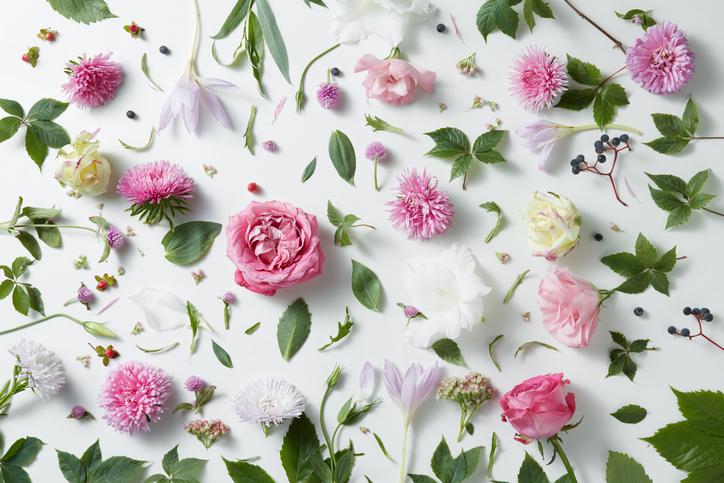 elegant-background-of-pink-roses-611865658_727x484.jpeg